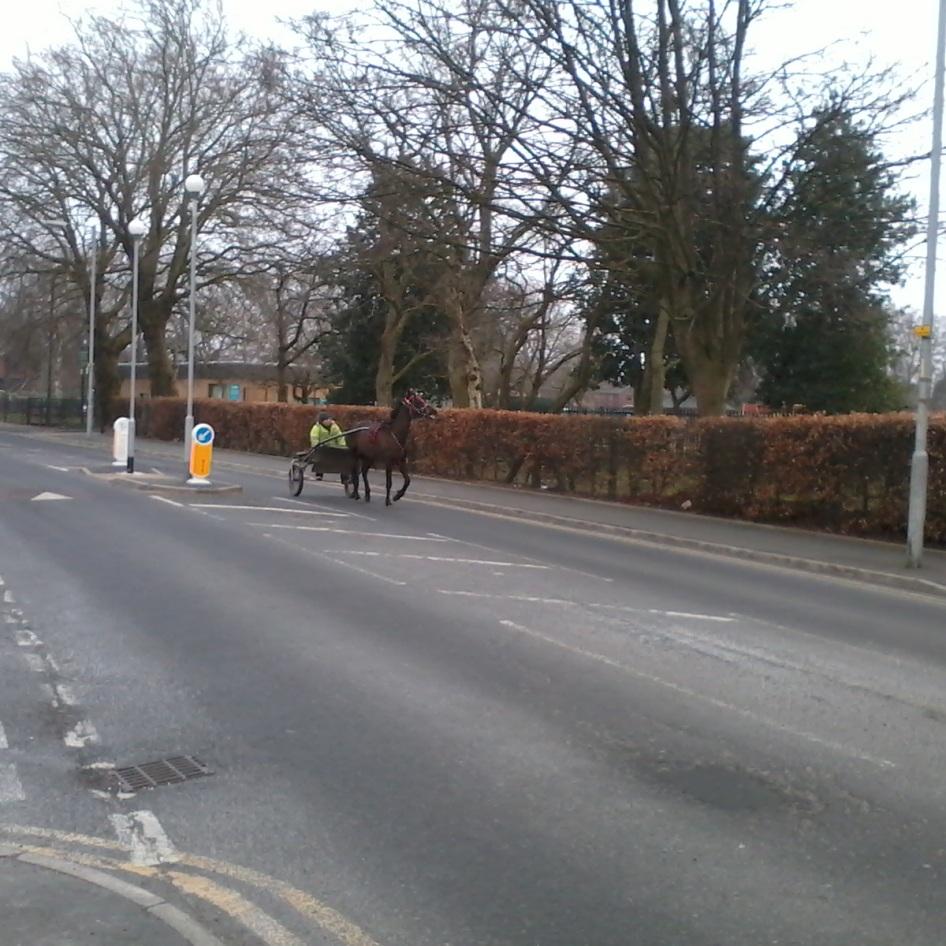 horses + donkeys