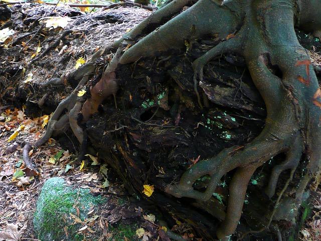 tree-59630_640