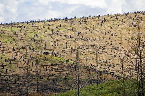 picture showing deforestation on Mount Mulanje